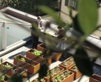 Hotel milano scala si unisce a green pearls for Boutique hotel definizione